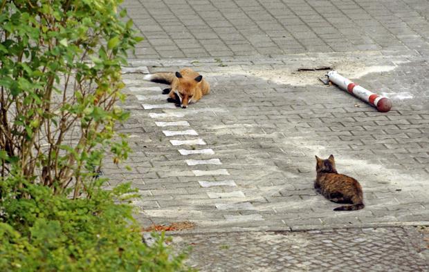 ...beim Fuchs die Angst vor Krankheiten, die den Menschen Sorge macht (Foto: José Giribas / Fotofinder.com)