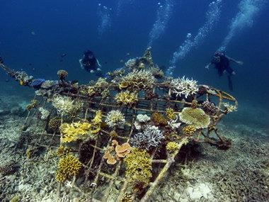Mit solchen Stahlkonstruktionen, durch die schwacher Gleichstrom geleitet wird, erzeugt Tom Goreau künstliche Algengärten: Durch Elektrolyse lagert sich Kalkstein ab, auf dem Korallen angesiedelt werden. Die werden durch die leichte Spannung in ihrem Stof (Marionpinta - Own work)