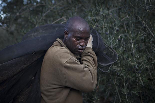 Ein Mann aus dem Senegal, der sich für acht Jahre zur Olivenernte in Spanien verpflichtet hat. Er muss dafür immer monatelang seine Frau und seine drei Töchter alleine zurücklassen (Foto: Irving Villegas)