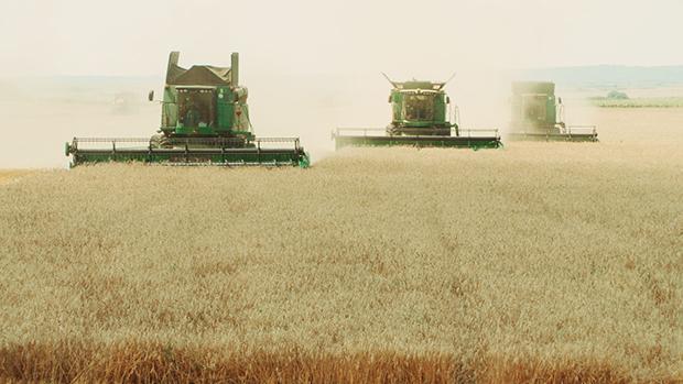 Am meisten lohnt sich Landwirtschaft heute, wenn man sie im ganz großen Stil betreibt – so wie hier in Rumänien  (Foto: alfredobini\cosmos)