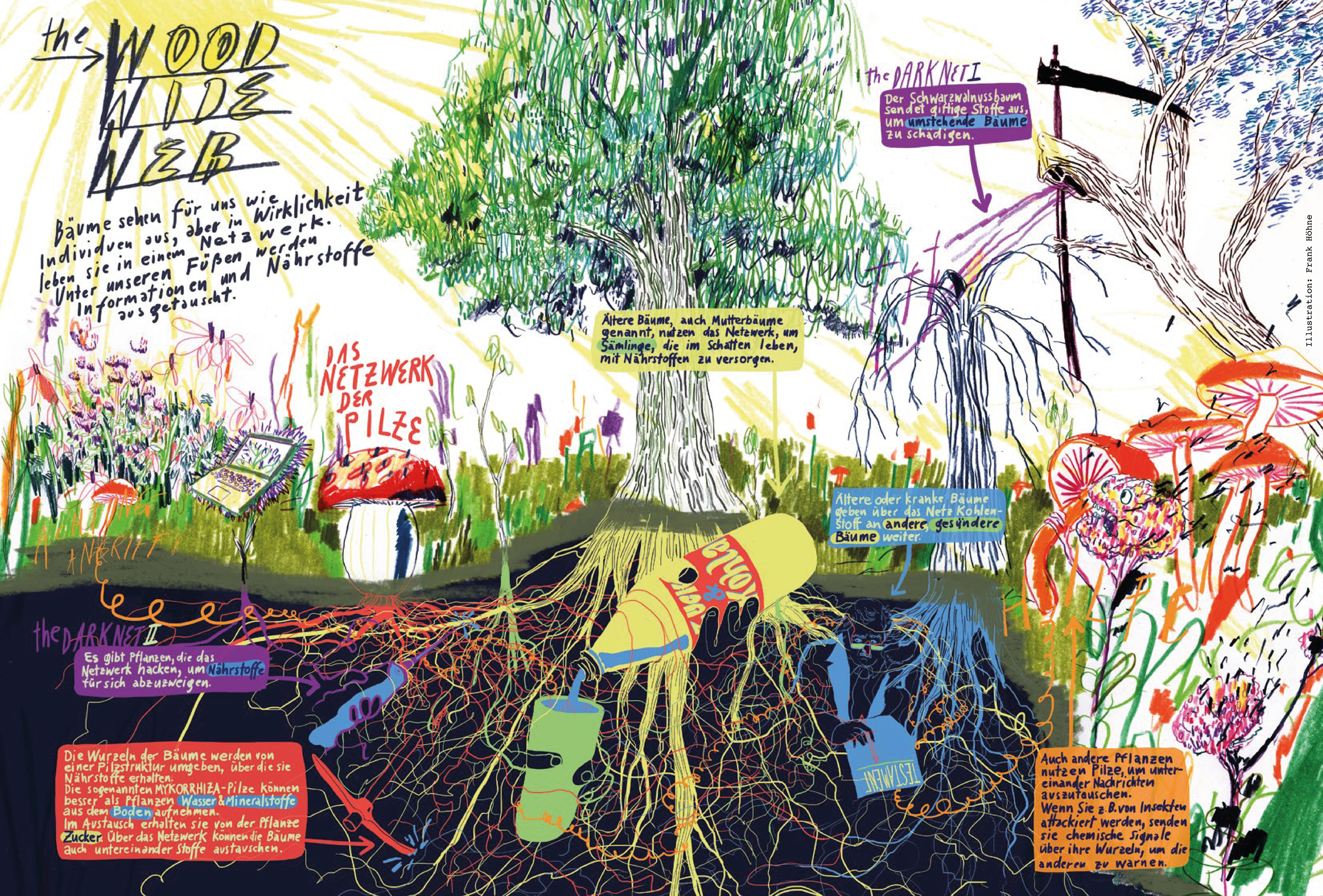 Wie Pflanzen miteinander kommunizieren. Ein Schaubild