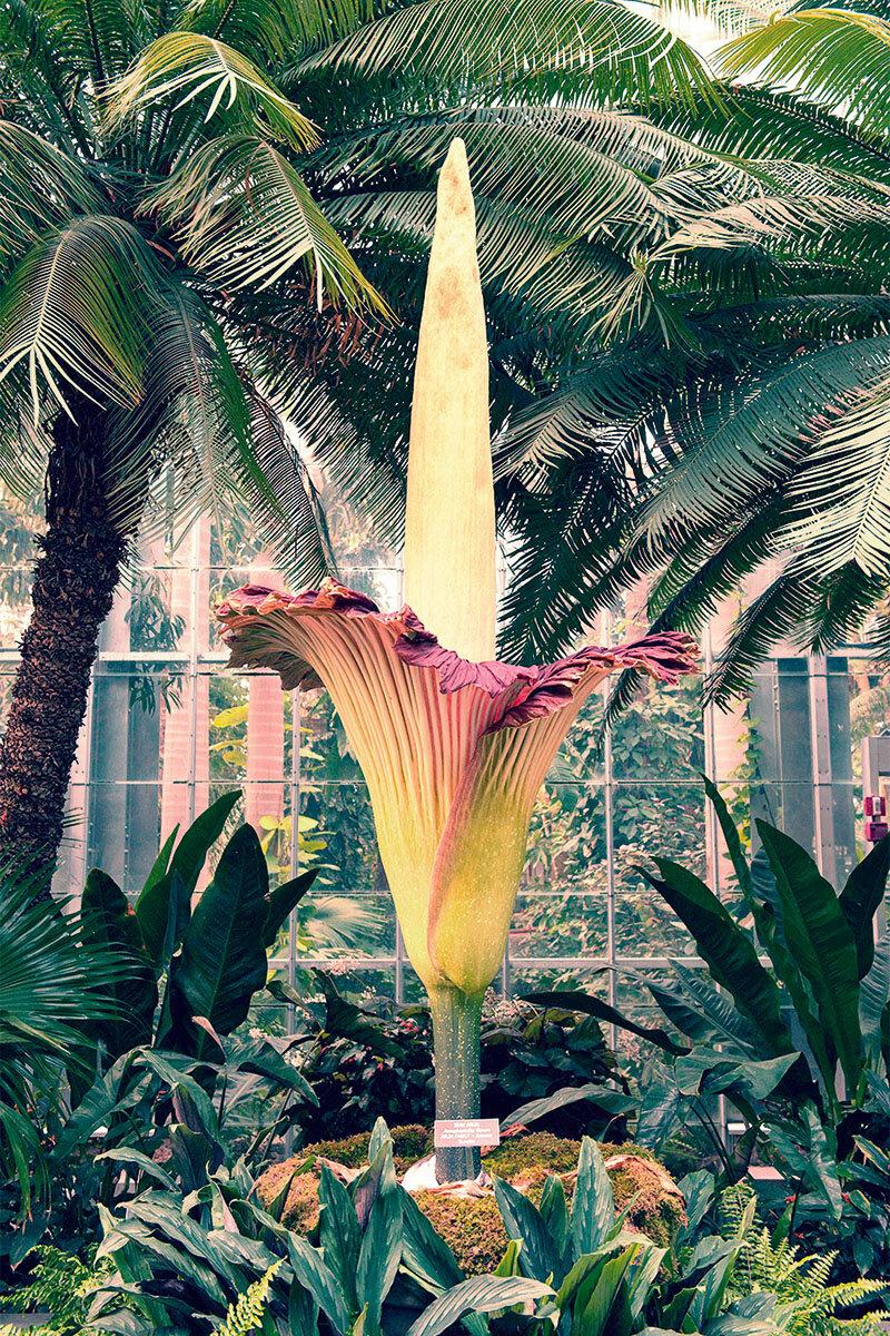 Botanischer Garten (Foto: ZUMA Wire/IMAGO)