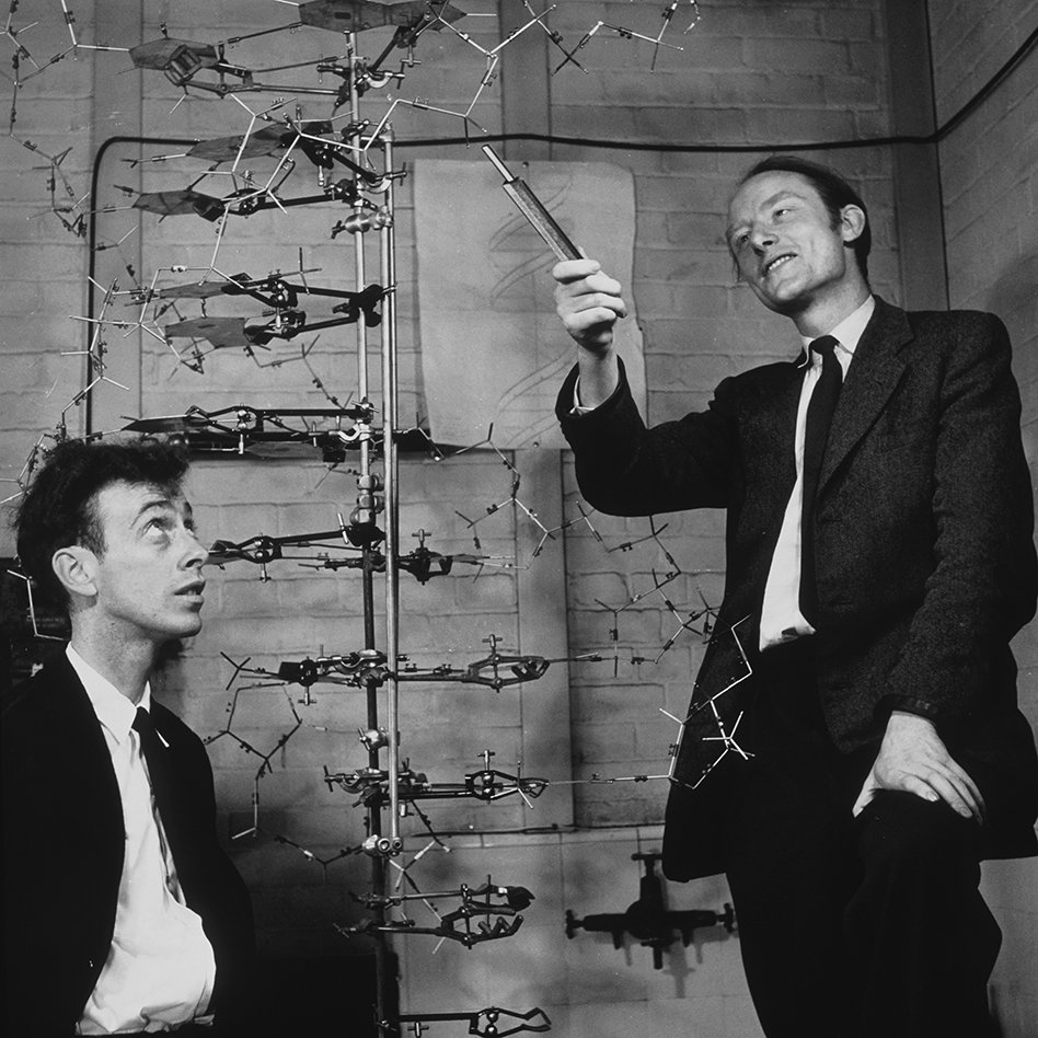 James Watson und  Francis Crick mit einem DNA-Modell  (Foto: Science Photo Library / Barrington Brown, A. / Gonville And Caius College)