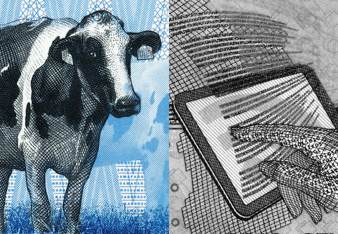 Kuh und Tablet