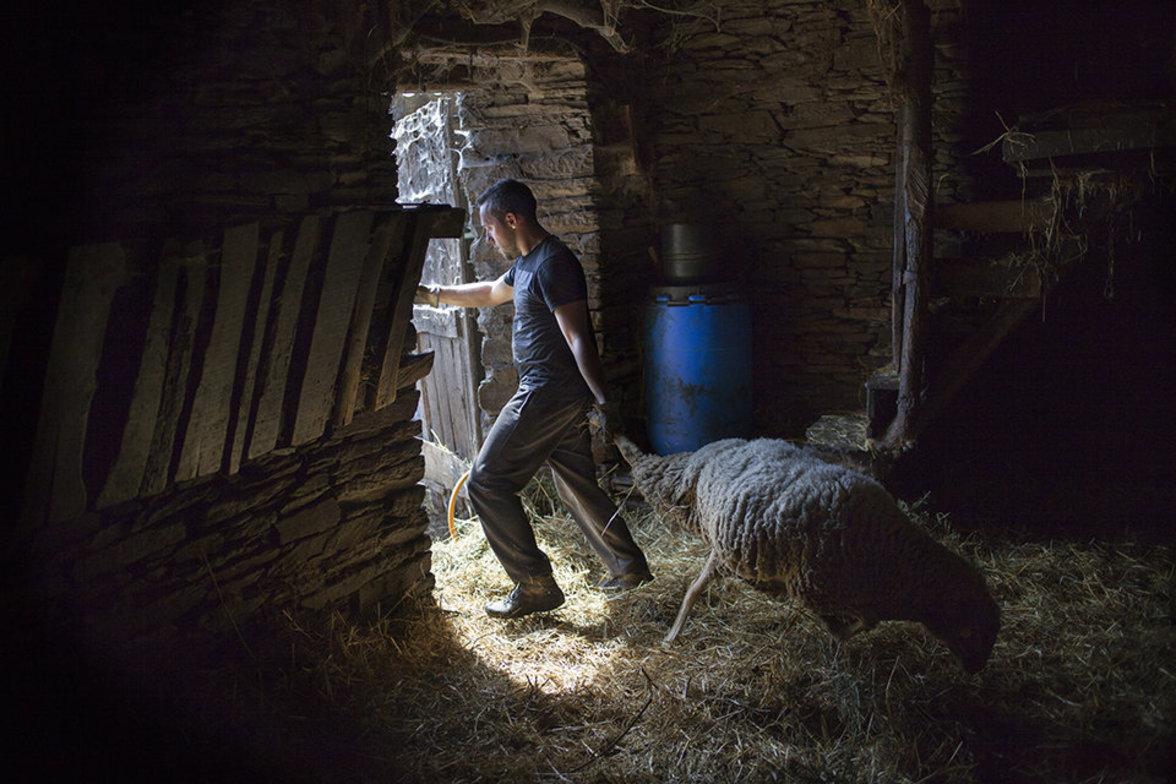 Saisonarbeiter mein Schafe scheren