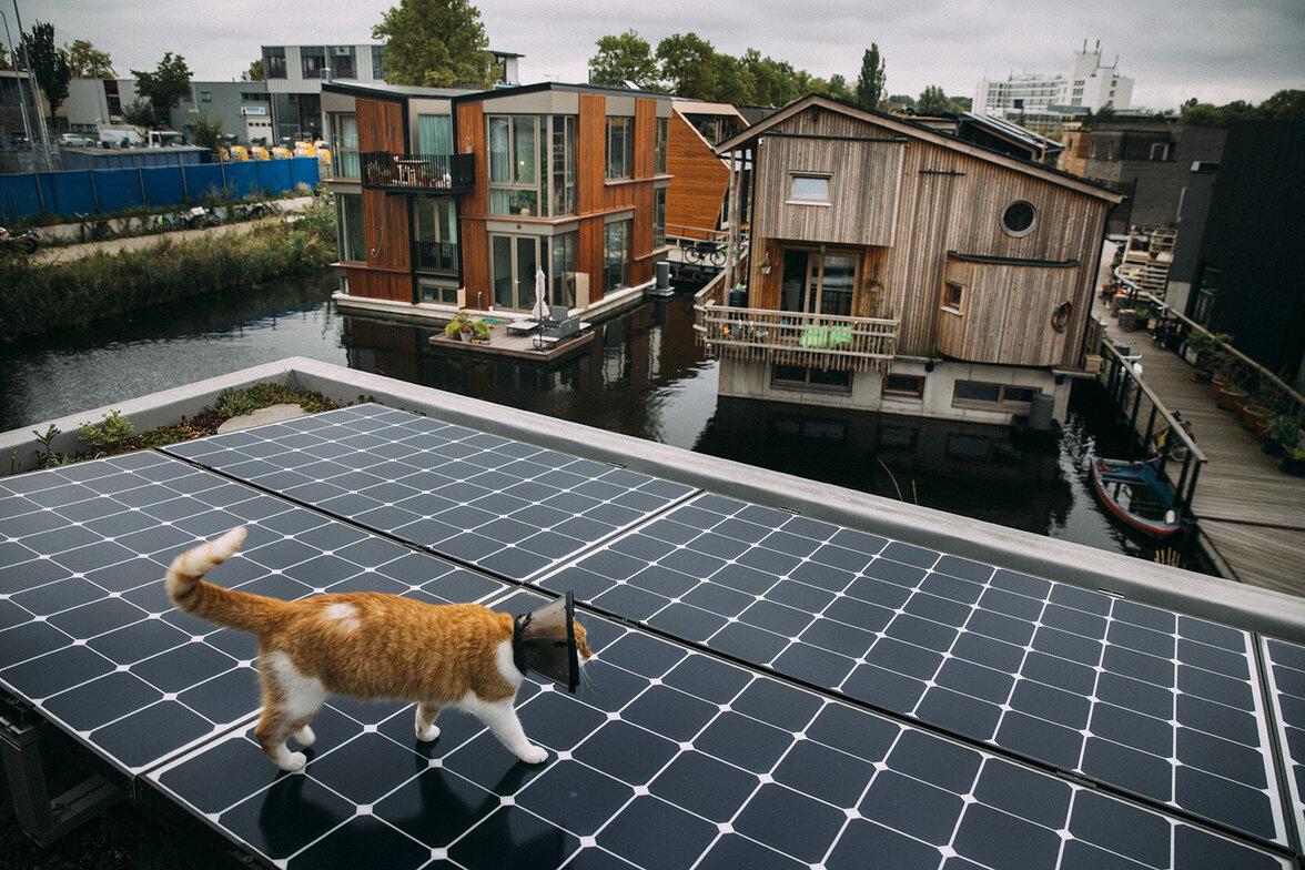 Amsterdam, Corona, Nachhaltigkeit, Donut, Hausboot