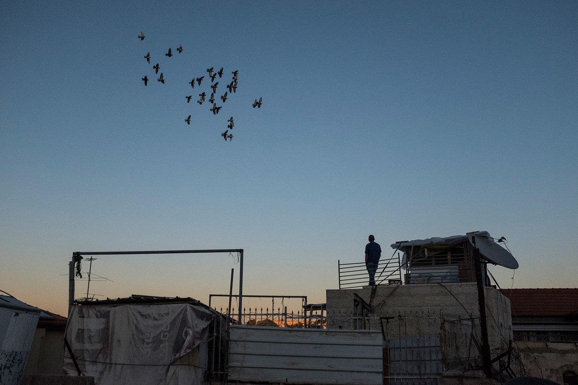 Ein palästinensischer Taubenzüchter schaut zu wie seine Tauben gen Abendhimmel fliegen.