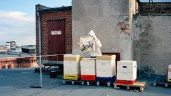 Berliner Imkerin auf einem Dach