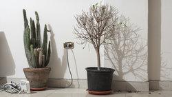 Router und Pflanzen