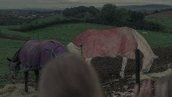 Louise Moorhead leitet Therapie mit Pferden für Teenager auf einem Reiterhof bei Derry