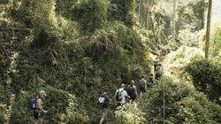 Thailand-Touristen, die den Urwald besuchten …