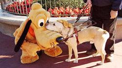 Pluto und Blindenhund