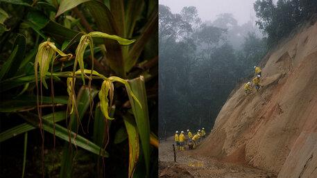Nebelregenwald von Ecuador