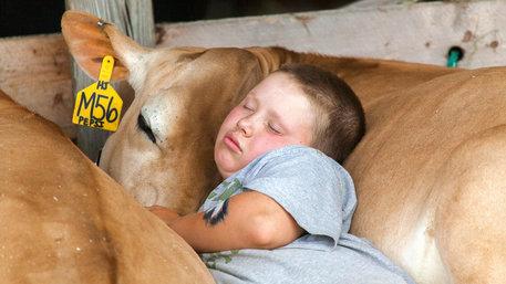 Junge und Kuh schlafen